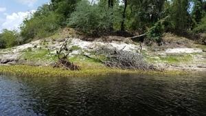 Natural vegetation or not? 30.3862200, -82.9056900