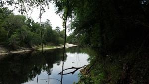 Pipeline sign across Suwannee River (through the center tree), 30.4076500, -83.1563000