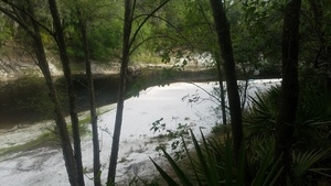 Woods Ferry Tract Landing, 30.3615630, -82.8688362