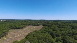 Clearcut between creek and Withlacoochee River