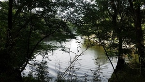 N. up Suwannee River 30.4075520, -83.1567065
