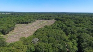 Clearcut and Withlacoochee River