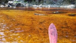 Yellow water, 30.3842900, -82.8892900