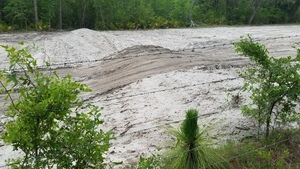 Longleaf in fence; tracks over dam 30.4048880, -83.1528402