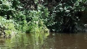 Swamp mallow, 30.5837702, -83.2620839