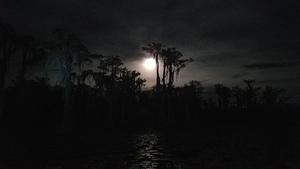 Full moon cypress, Banks Lake 31.0226795, -83.1122524