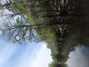 Treescape 30.9290500, -83.0383817