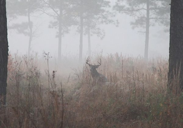 [Deer in fog]