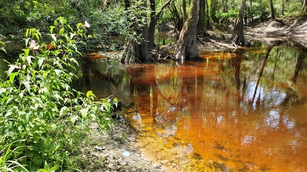 [Beside tea-colored Withlacoochee River]