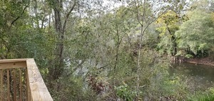 [Upstream through trees, 2019:10:17 16:01:13, 30.6294432, -83.3186451]