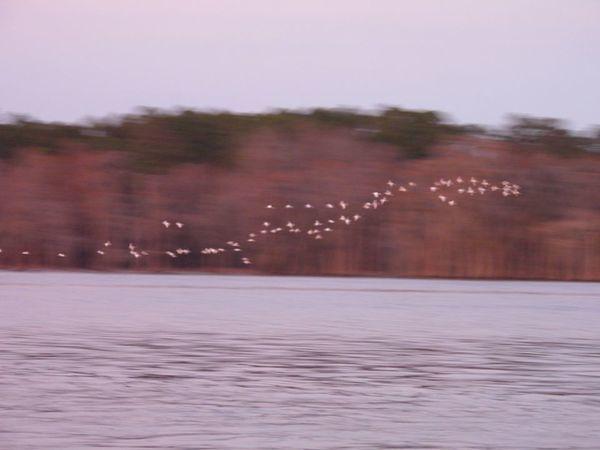 [More birds]
