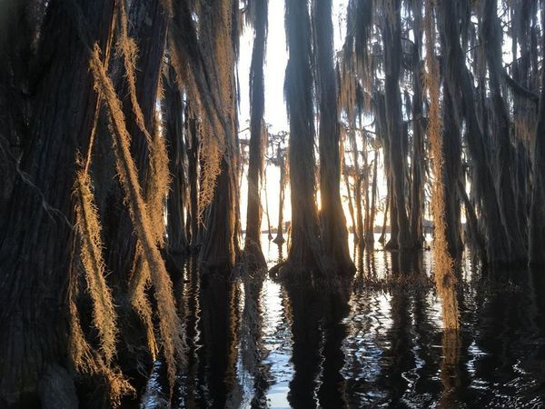 [Sunset behind cypress]