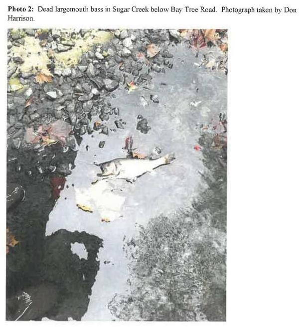 [Photo 2: Dead largemouth bass in Sugar Creek below Bay Tree Road.]