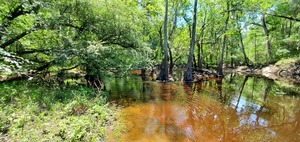[Withlacoochee River downstream]