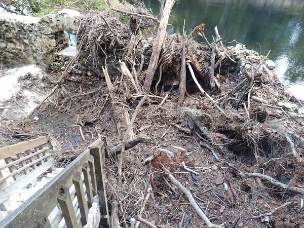 [Debris at Suwannee Springs (SRWMD)]
