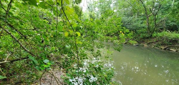 [Upstream Sugar Creek]