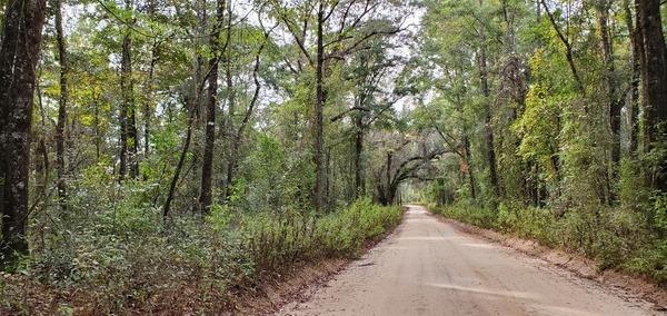 [Canopy Road, NE 221 Ave., NE Pineapple St. 2019:10:17 15:51:13, 30.6263253, -83.3512308]