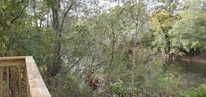 [Upstream through trees, 2019:10:17 16:01:13, 30.6294432, -83.3186451]