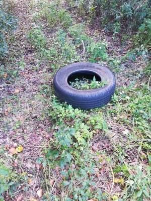 [Tire]