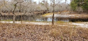 [Suwannee River coming in below the Sill, 09:41:28, 30.8039080, -82.4192722]