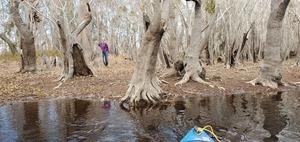 [Gretchen, cypress, mistletoe, bank, river, 10:56:10, 30.8012610, -82.4225960]