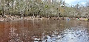 [Mistletoe, boats, river, 11:04:35, 30.7988077, -82.4240784]