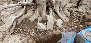 [Unnatural rocks by a tree, 11:09:00, 30.7993700, -82.4255200]