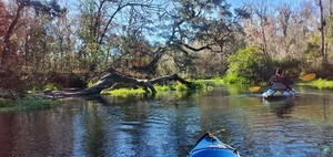 [Tree and paddler, 11:03:49, 29.9779735, -82.7592898]