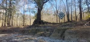 [Tree Farm, 14:50:19, 29.9298961, -82.7651576]