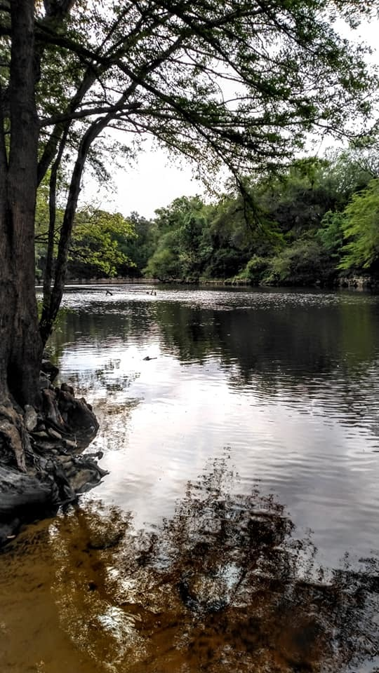 [Withlacoochee River]