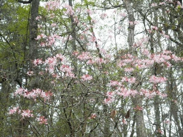 [Flowering plant]