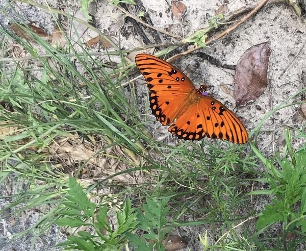 [1 Butterfly]