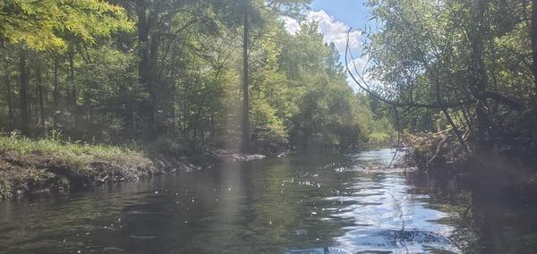 [Looks like a creek, 2020:07:18 15:41:25, 30.2535522, -83.2595257]