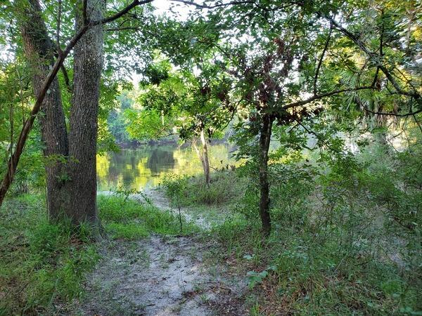 [Suwannee River below camp host pad, 2020:07:19 08:10:43, 30.24658, -83.24695]