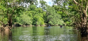 [Out to the river, 2020:07:18 16:31:40, 30.2542089, -83.2536671]