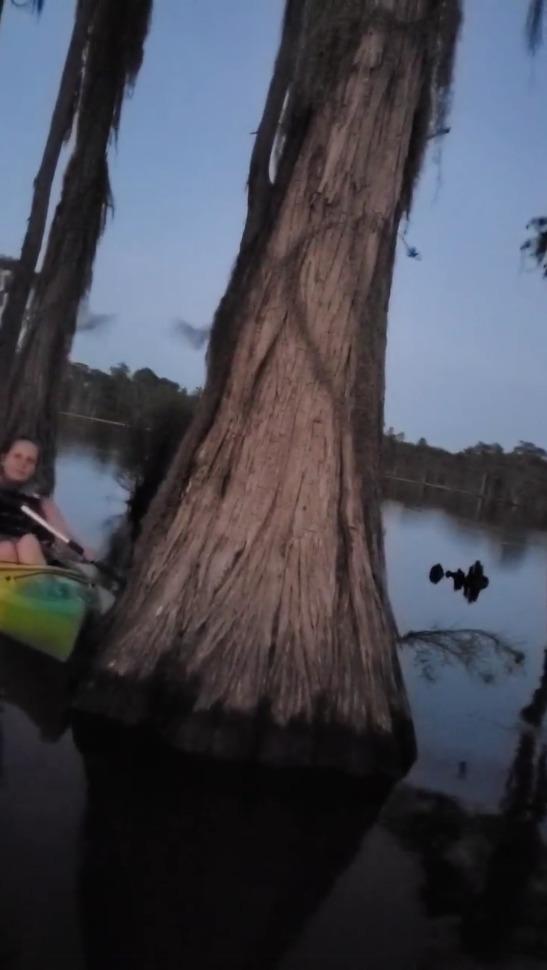 [Bat tree]
