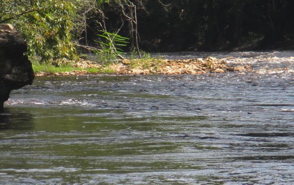 [Jennings Defeat rapids looking upstream from the west river bank]