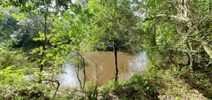 [Fast Withlacoochee River]