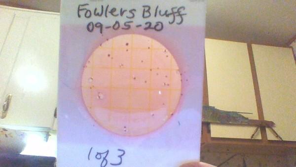 [Fowlers Bluff 1]