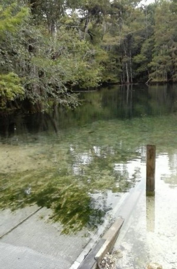 [Manatee Springs State Park Launch 2020-09-14]