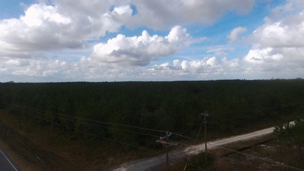 [T Model Road to Okefenokee NWR]