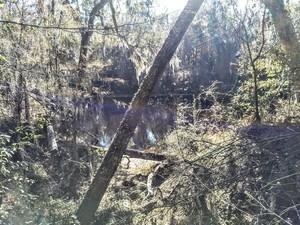 [Suwannee River @ Gibson Park]