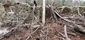[Wedged driftwood]