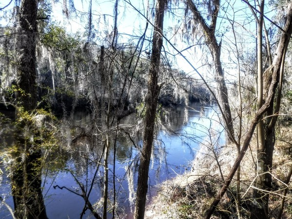 [Suwannee River at Gibson Park]