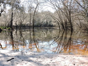 [White sand, Withlacoochee River, Knights Ferry]