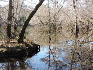 [Knights Ferry downstream, Withlacoochee River]