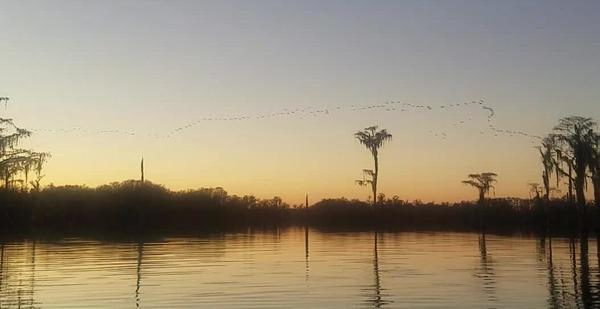 [Photo: John S. Quarterman, Sand hill cranes, Banks Lake NWR, 2018-12-22]