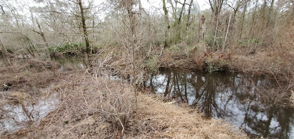 [Toms Branch, Withlacoochee River, 12:07:23, 30.9822675, -83.2648693]