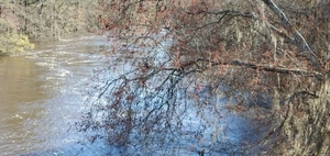 [Downstream with red maple]