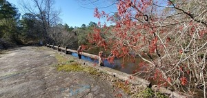 [Red maples and slough upstream in Brooks County]